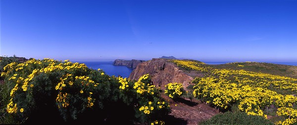 Coreopsis and overlook near campsites