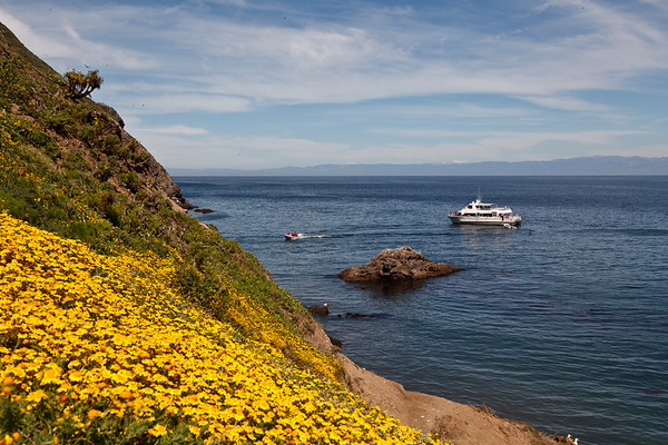 West Anacapa Island / Frenchy's Cove