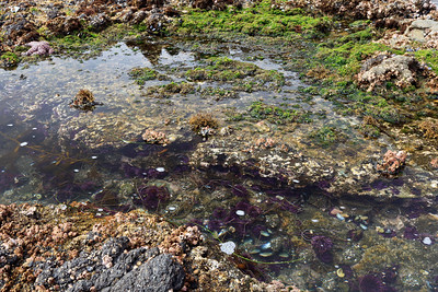 Frenchy's Cove tide pools