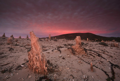 Caliche Forest at sunrise, San Miguel Island