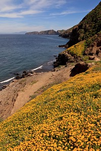 Middle Anacapa Island viewed from Frenchy's Cove