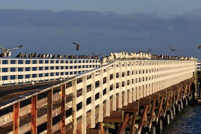 Prisoners Harbor pier