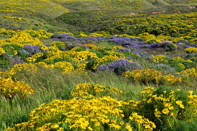 A kaleidoscope of brilliant color covers the landscape along the trail to Harris Point