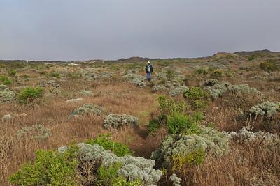 Point Bennett trail