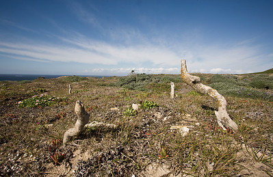 Caliche, Lester Point Trail