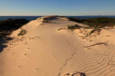 Raven tracks in dunes above Simonton Cove
