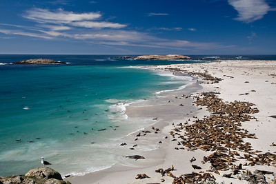 San Miguel Island - Pinnipeds and Caliche