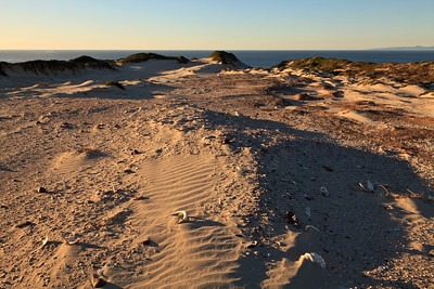 Midden site in dunes above Simonton Cove