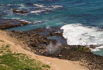 Sea Lion Rookery with blowhole