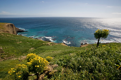 Sea Lion Rookery overlook, with coreopsis
