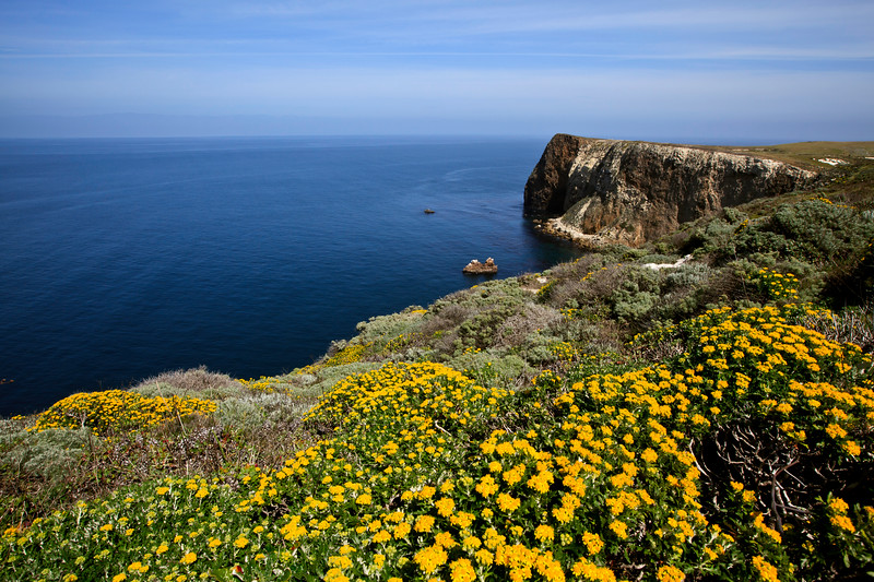 Springtime flowers at Cavern Point