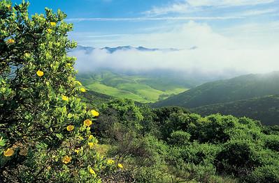 Central Valley framed by an island bush poppy