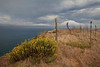 Potato Harbor trail.  (Isocoma menziesii)  Goldenbush