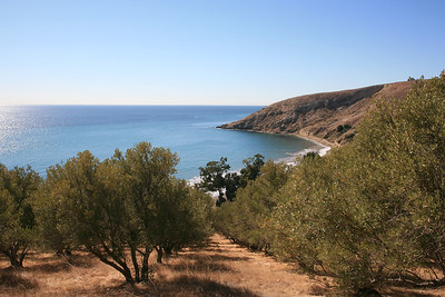 Smuggler's Cove, with 100++ year old olive grove