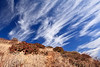 Interesting cloud formations.  Santa Cruz Island buckwheat (Eriogonum arborescens); island buckwheat and everlasting (Pseudognaphalium beneolens) in foreground, in matrix on various Mediterranean annual grasses.