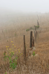 Scorpion Canyon Loop Trail - Old fence along Trail