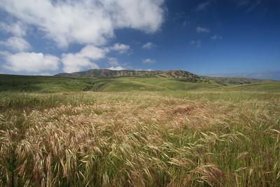 Montańon Ridge - Grassy meadow with Montańon Ridge in background