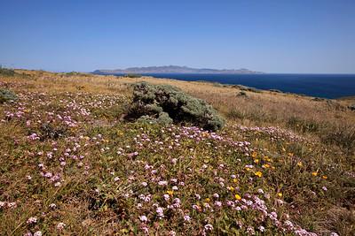 Springtime flowers.  Santa Cruz Island in the background.