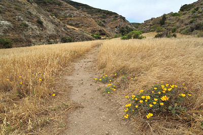 Cherry Canyon trail