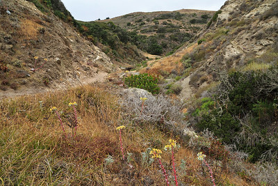 Cherry Canyon trail