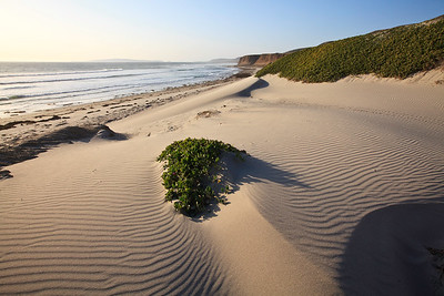 Strong northwesterly winds have shaped and sifted the fine-grained white sand dunes at China Camp beach.  Visible in the far background is San Miguel Island
