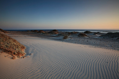 Evening light falls on the fine-grained white sand dunes at China Camp beach, which  have been shaped and sifted by strong northwesterly winds.