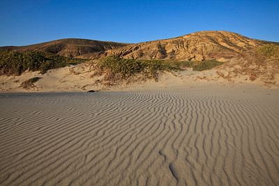 Strong northwesterly winds have shaped and sifted the fine-grained white sand dunes at China Camp beach.