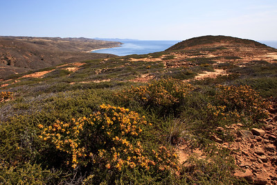 Springtime vegetation at South Point, overlooking Johnson's Lee