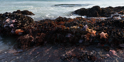 Intertidal Zone along the south coast of the island