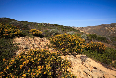 Springtime vegetation at South Point