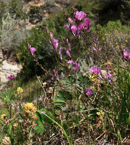 Springtime wildflowers near the entrance to Lobo Canyon.