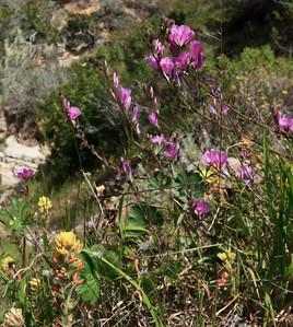 Springtime wildflowers near the entrance to Lobo Canyon.