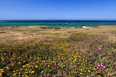 Springtime wildflowers near the mouth of Lobo Canyon