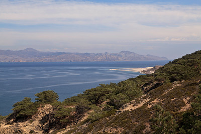 The Torrey Pines on Santa Rosa Island grow at an elevation of 200 - 500 feet.  They are the only native Torrey Pines on the Channel Islands.  In the distance is Skunk Point.  Far distance is Santa Cruz Island.