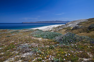 Sandy beaches of Skunk Point.  Santa Cruz Island in the background.