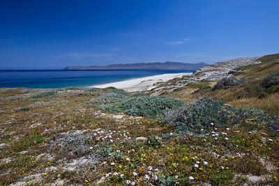Sandy beaches of Skunk Point.  Santa Cruz Island in the background.