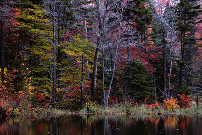 New Hampshire forest