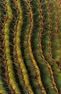 Saguaro cactus pattern