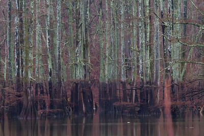 Flood line at Oxbow Lake with bald cypress