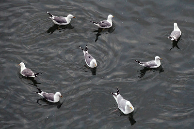 Gull patterns