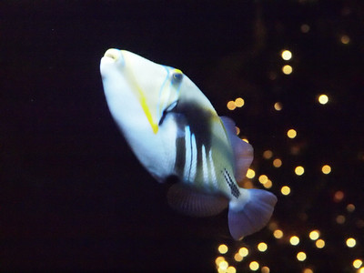 Fish out of focus, but striking anyway.  At the N.C. State Aquarium at Fort Fisher.