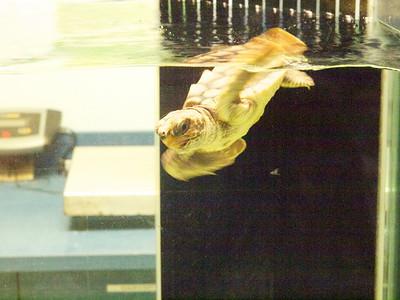 North Carolina Aquarium at Pine Knoll Shores Copyright 2011 Neil Stahl