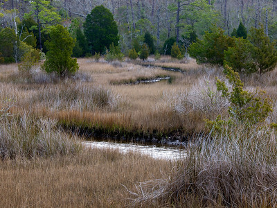 Cedar Point Tideland Trail, Croatan National Forest Copyright 2011 Neil Stahl