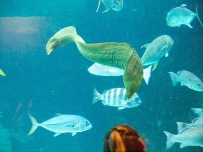 North Carolina Aquarium at Pine Knoll Shores Copyright 2011 Neil Stahl