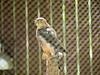 At the Carolina Raptor Center