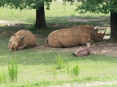 North Carolina Zoo on a hot day