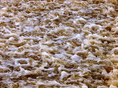 Bear Creek Lake State Park, Virginia  Copyright 2012 Neil Stahl