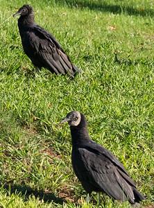 Vulture Haven
