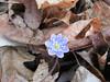 #3) Ephemera (chapter winner of the photo category: flora). Photo by Susan McSwain.