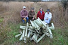 Tree Liberators and Pile of Old Tree Tubes
